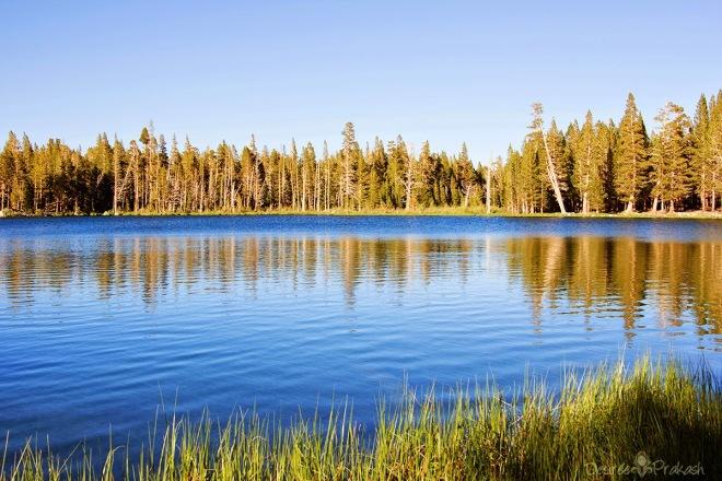 Yosemite Road Trip | Desiree Dabbles