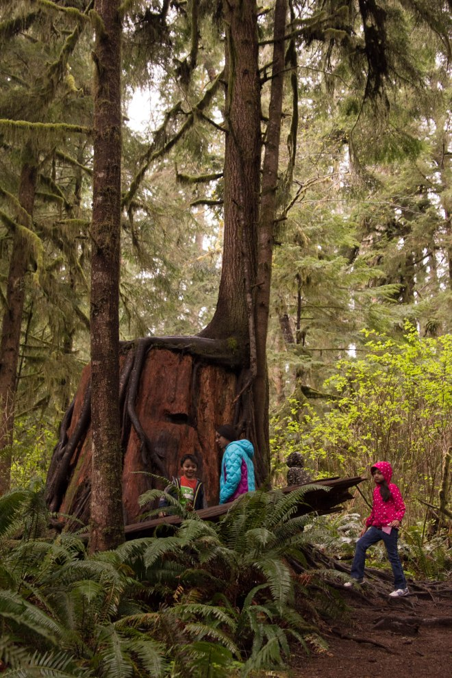 Rainforest | Desiree Dabbles