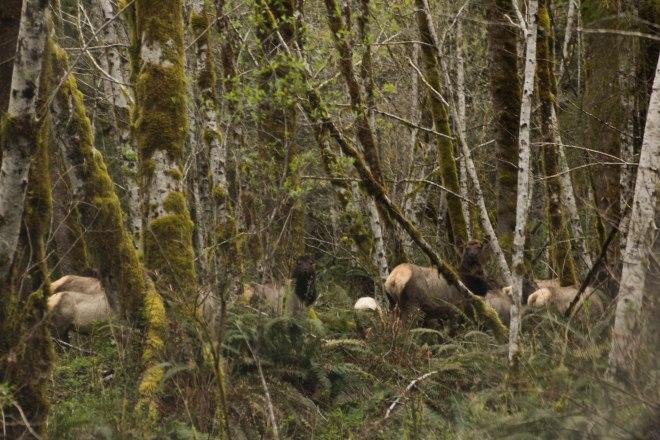 Elk! | Desiree Dabbles